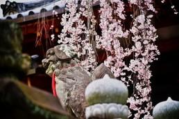 氷室神社6