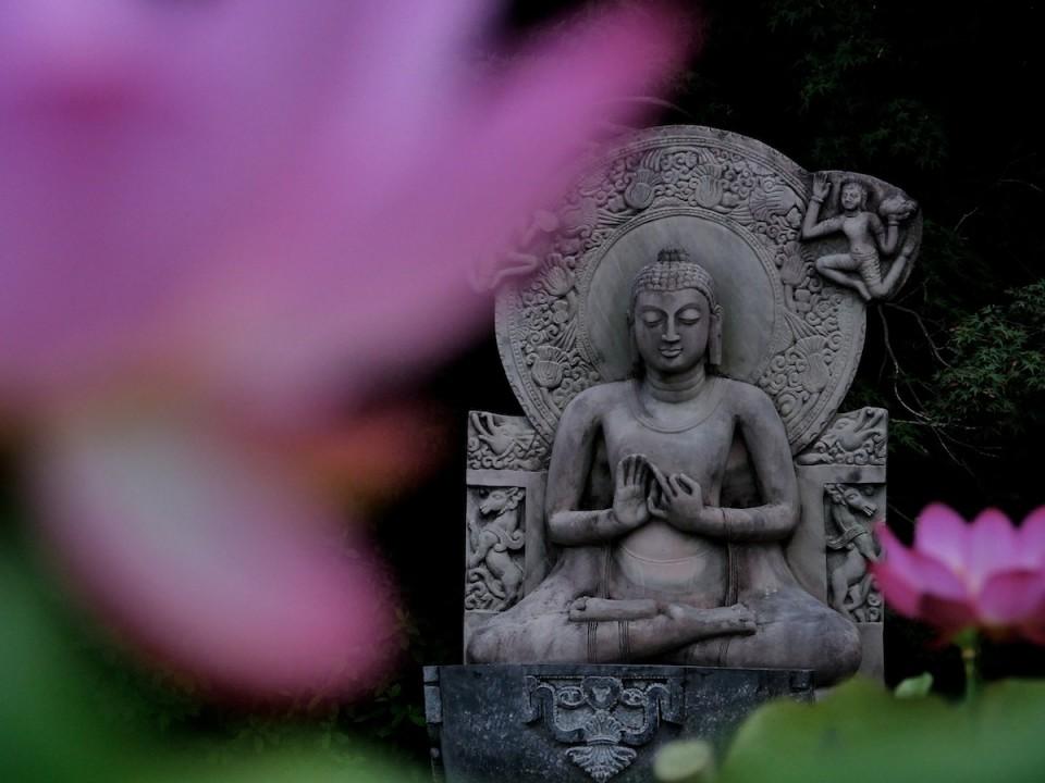 喜光寺の蓮と石仏