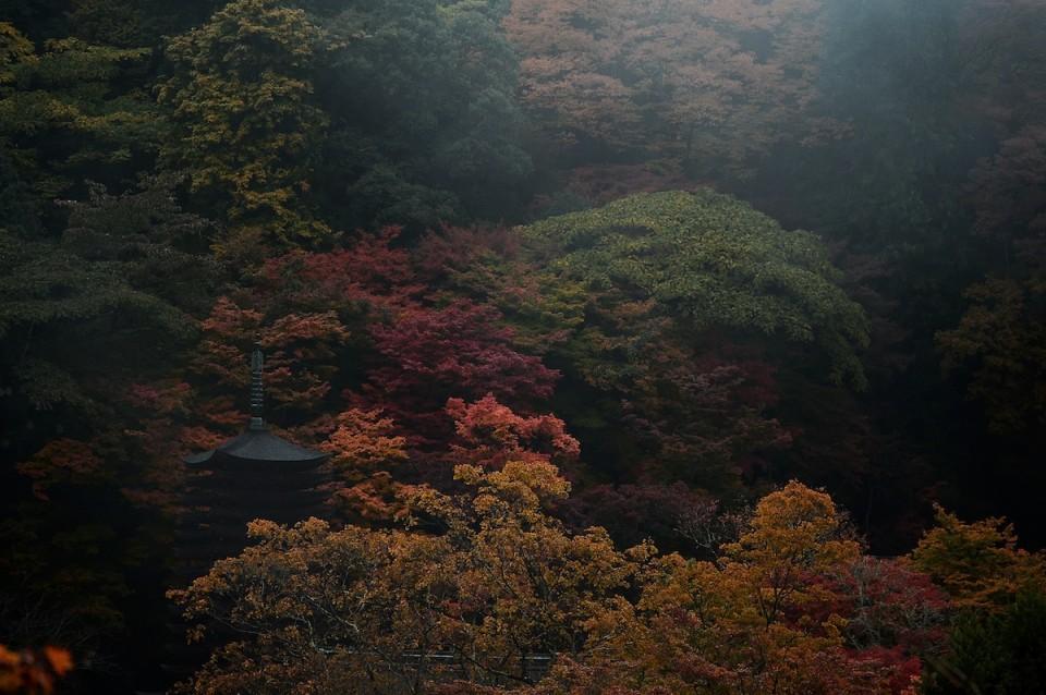 D4Y_5093談山神社の紅葉