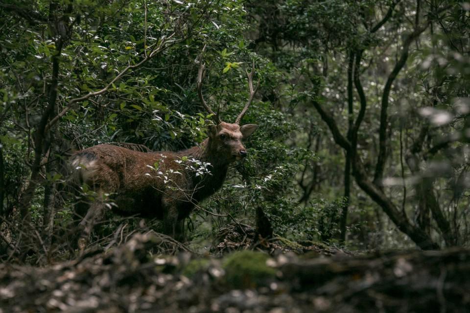 5D3_3727-1鹿