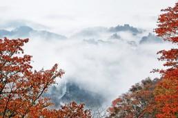 吉野山雲海と紅葉