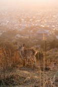 R2_05590D鹿と大仏殿