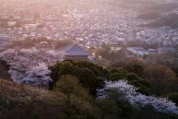 R2_05595D桜と大仏殿