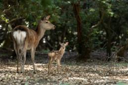 73_04008子鹿