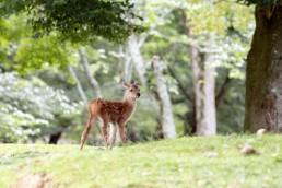 73_0796子鹿