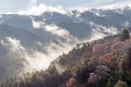 73_01672吉野山