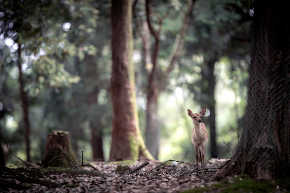 3_207609森の中の鹿